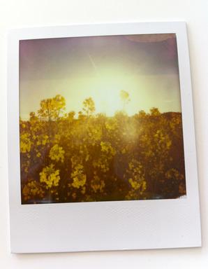 morning Polaroid